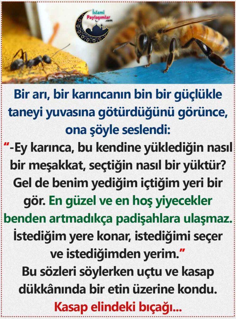 arı ile karıncanın ibretlik kıssası arı ve karınca hikayesi